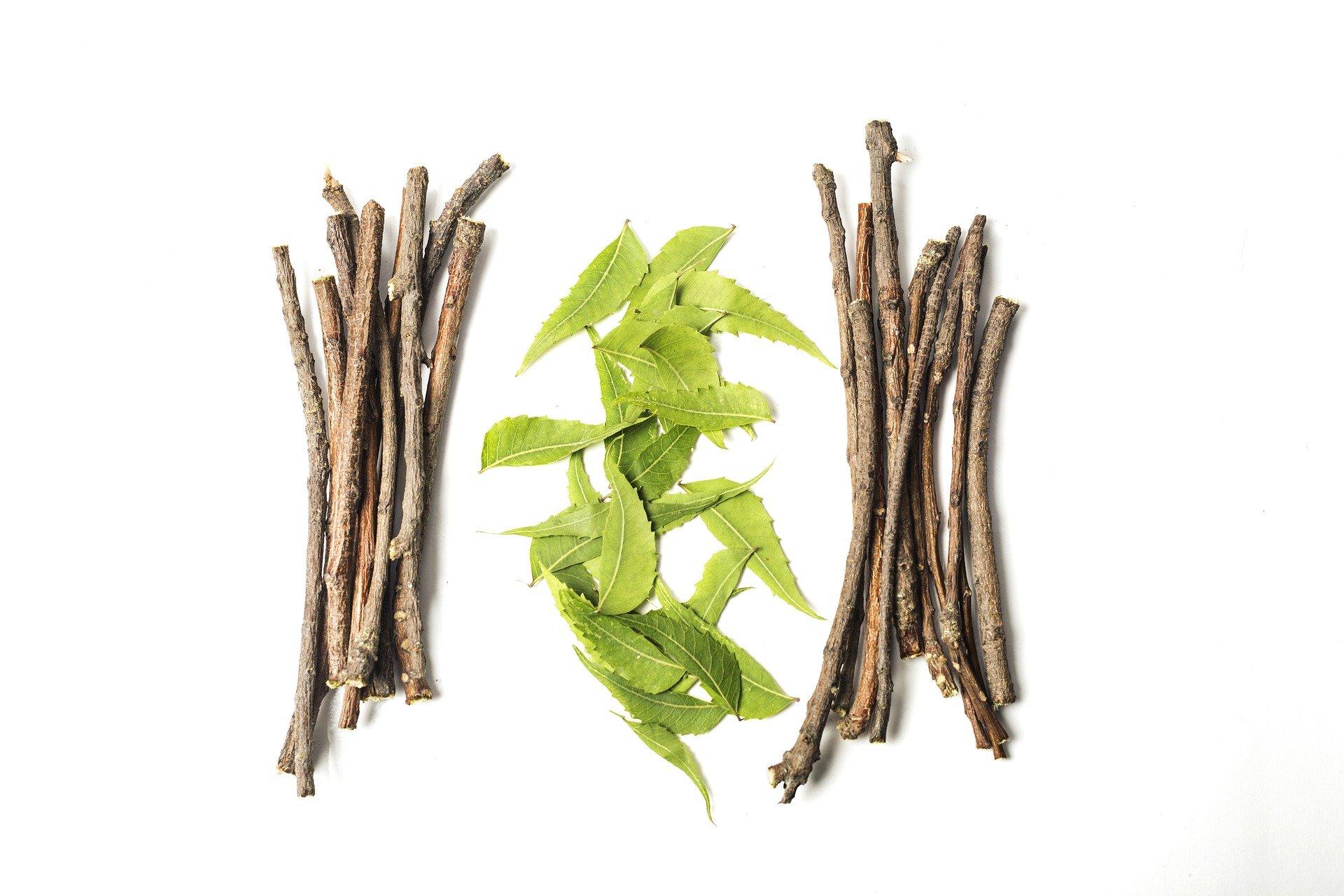Ashwaganda – seit mehr als 3000 Jahren die ayurvedische Heilpflanze gegen chronischen Stress
